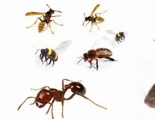 شركة مكافحة حشرات فى دبى |0507978175|مكافحة حشرات