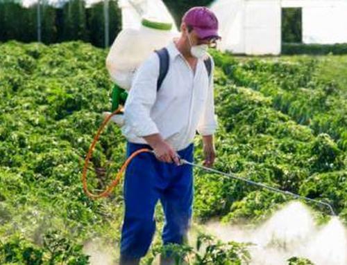 شركة مكافحة صراصير عجمان |0507978175|ابادة حشرات