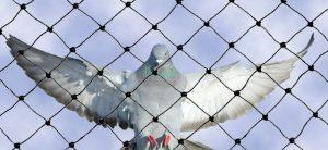 شركة مكافحة الطيور ابو ظبي | 0507978175 | الامام