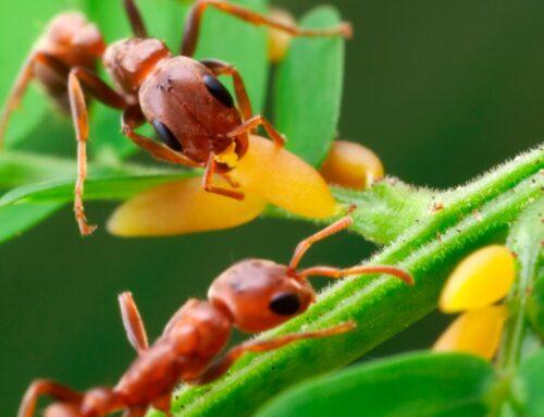 شركة مكافحة الرمة في دبى |0507978175| قضاء النمل الابيض
