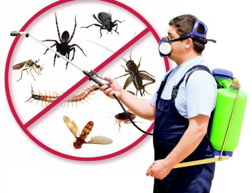 شركة مكافحة حشرات في عجمان |0565353098| ابادة نهائية